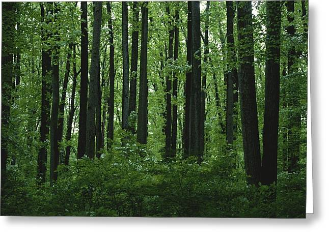 Forests And Forestry Greeting Cards - A view of the forest in Greeting Card by Taylor S. Kennedy