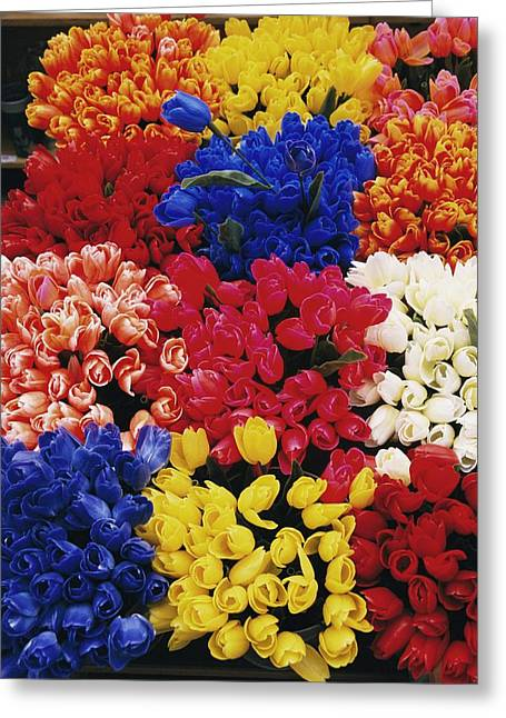 Amsterdam Market Greeting Cards - A View Of Tulips For Sale At The Albert Greeting Card by Richard Nowitz