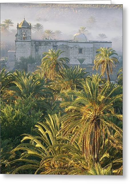 Art Of Building Greeting Cards - A View Over Palm Trees Greeting Card by Bill Hatcher