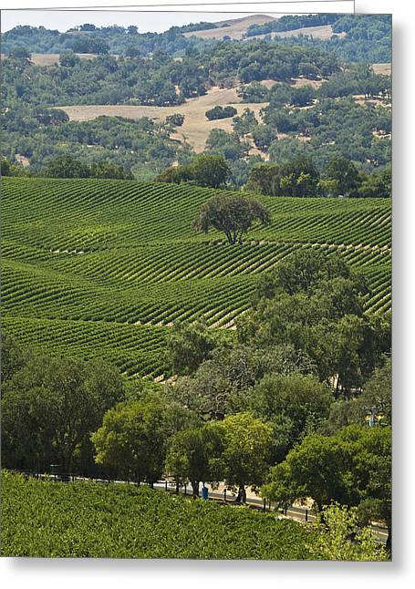 Sonoma County Greeting Cards - A Vineyard In The Anderson Valley Greeting Card by Richard Nowitz