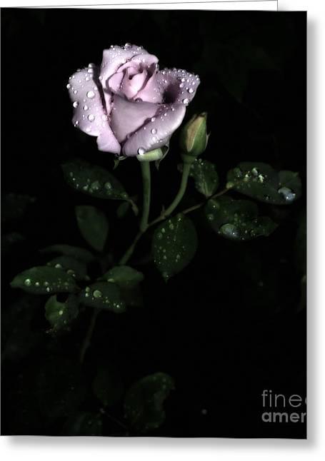 A Vintage Rose Greeting Card by Eva Thomas