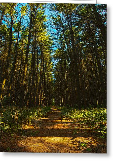 A Walk In The Pines Greeting Card by Phil Koch