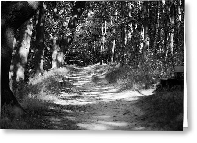 Deutschland Greeting Cards - A walk in the woods Greeting Card by Edward Myers