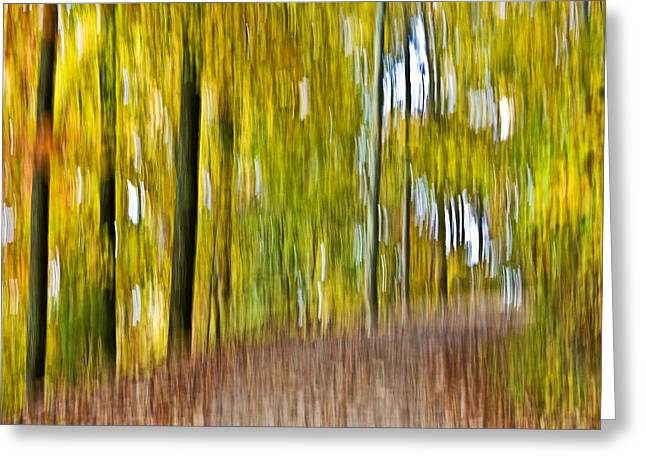 Susan Leggett Greeting Cards - A Walk in the Woods Greeting Card by Susan Leggett