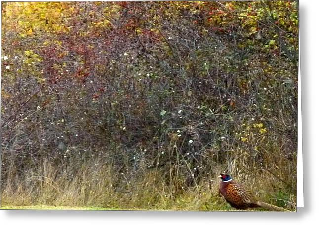 Watchful Greeting Cards - A Watchful Pheasant Greeting Card by Will Borden