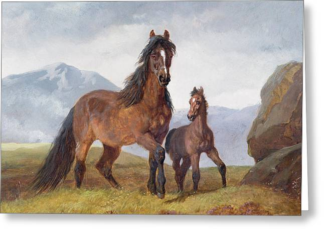 Herring Greeting Cards - A Welsh Mountain Mare and Foal Greeting Card by John Frederick Herring Snr