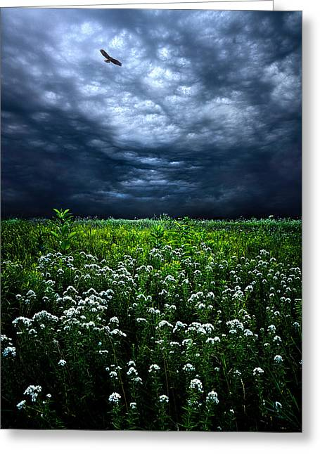 A Wild Heart Looking For Home Greeting Card by Phil Koch
