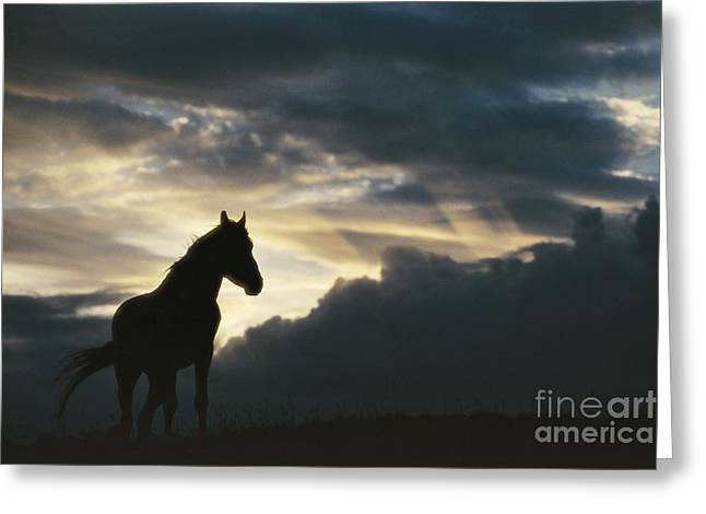 Pryor Greeting Cards - A Wild Horse Is Silhouetted Greeting Card by Raymond Gehman