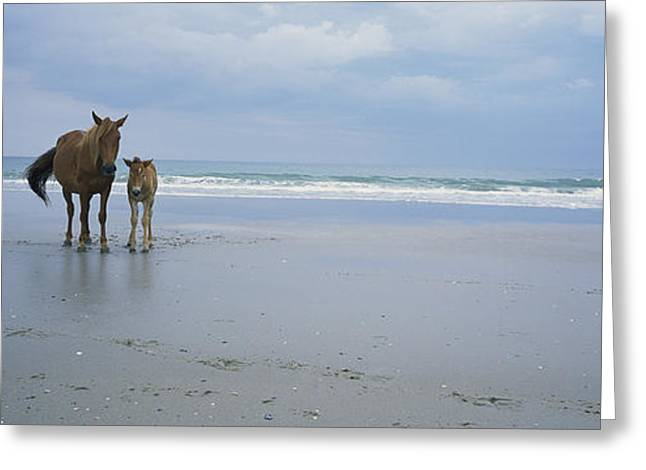 Ocean Mammals Greeting Cards - A Wild Mare And Foal On The Beach North Greeting Card by Stephen Alvarez