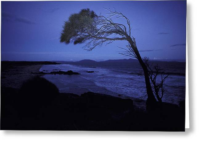 Stormy Night Greeting Cards - A Windswept Scraggly Coastal Tree Greeting Card by Jason Edwards