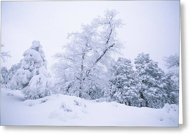 Prescott Greeting Cards - A Winter Landscape Of Snow-covered Greeting Card by Rich Reid