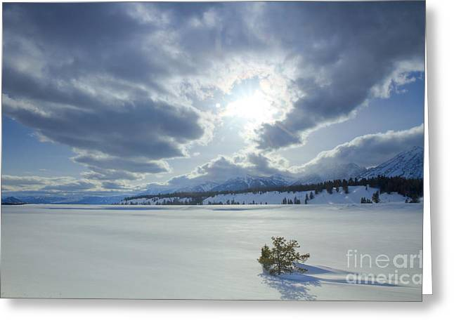 Evergreen Covered In Snow Greeting Cards - A Winter Sky Greeting Card by Idaho Scenic Images Linda Lantzy