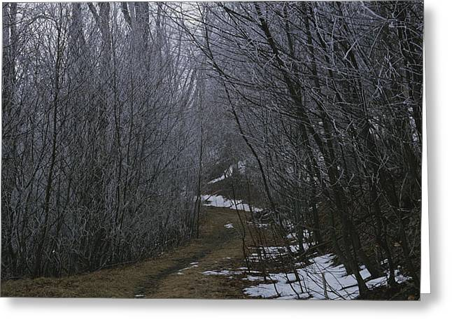 Park Scene Greeting Cards - A Winter View Of A Trail In Shenandoah Greeting Card by George F. Mobley
