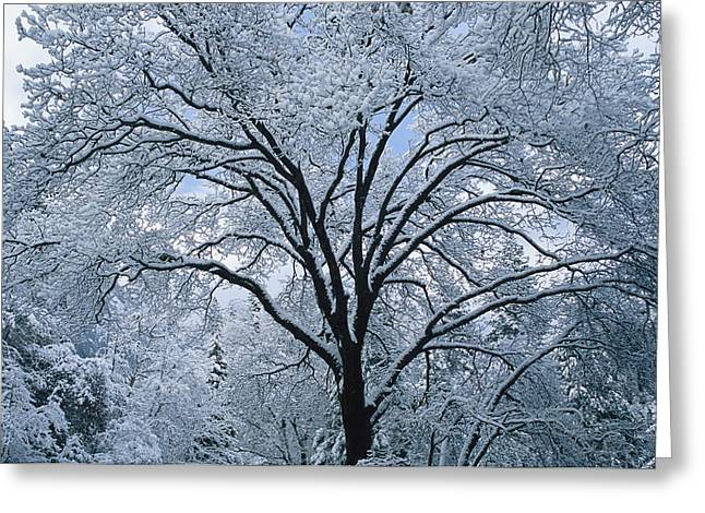 Park Scene Greeting Cards - A Winter Wonderland Of Snow-covered Greeting Card by Marc Moritsch