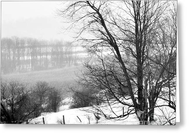 Winter White Fine Art Snow And Trees Greeting Cards - A Wintry Day Greeting Card by Gerlinde Keating - Keating Associates Inc
