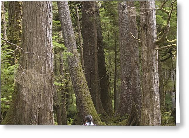 A Woman Walks In Old Growth Forest Greeting Card by Taylor S. Kennedy