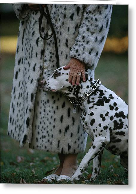 Senior Dog Greeting Cards - A Woman With Her Dalmatian, Dorado Greeting Card by Joel Sartore