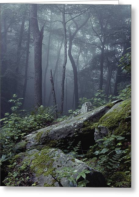Grandview Greeting Cards - A Wooded Hillside In A State Park Greeting Card by Bill Curtsinger
