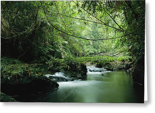 Forests And Forestry Greeting Cards - A Woodland Stream Winding Greeting Card by Steve Winter