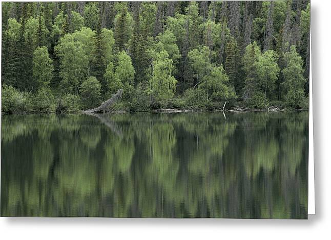 Woodland Scenes Greeting Cards - A Woodland View Is Reflected In A Body Greeting Card by Klaus Nigge