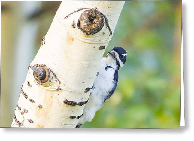 A woodpeck behind an eye of a tree Greeting Card by Ellie Teramoto
