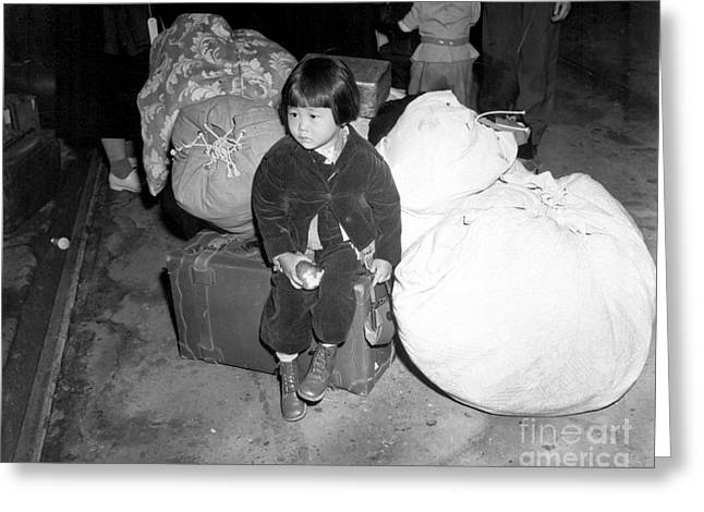 Evacuee Greeting Cards - A Young Evacuee Of Japanese Ancestry Greeting Card by Stocktrek Images