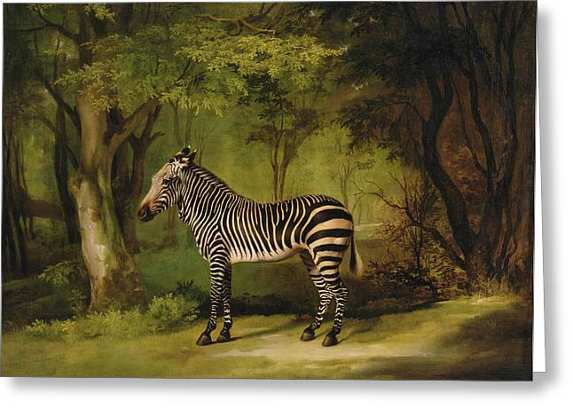 Wild Animals Paintings Greeting Cards - A Zebra Greeting Card by George Stubbs