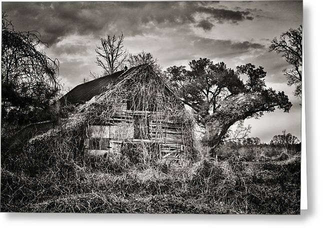 Abandoned Barn 2 Greeting Card by Brenda Bryant