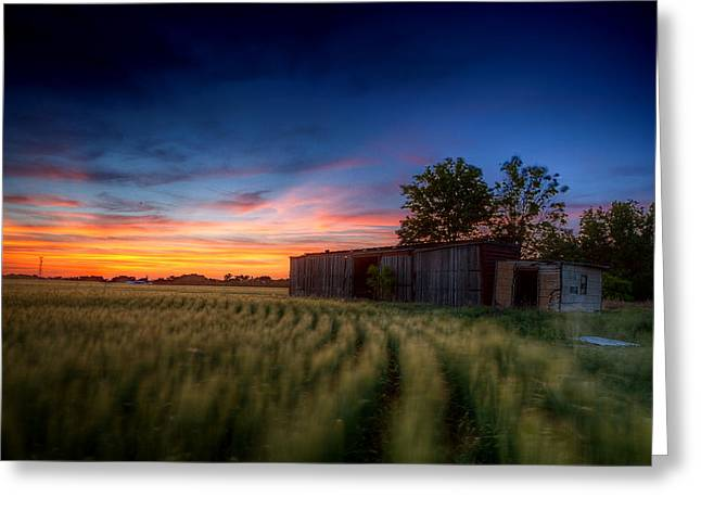 Boxcars Greeting Cards - Abandoned View Greeting Card by Thomas Zimmerman
