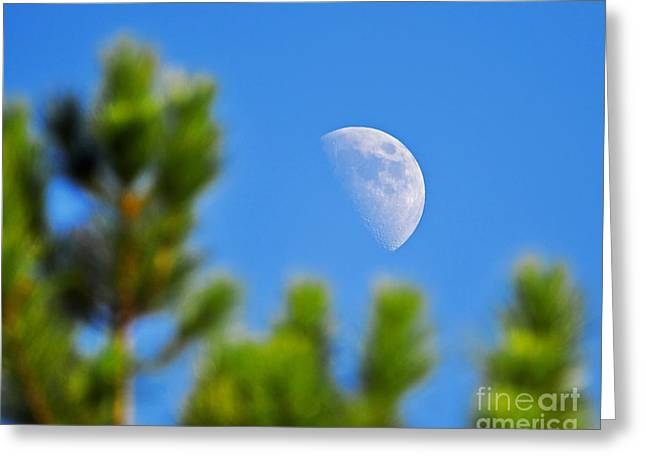 Luna Greeting Cards - Above the Pines Greeting Card by Al Powell Photography USA