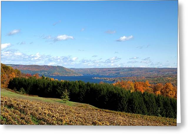 Keuka Lake Greeting Cards - Above the Vines Greeting Card by Joshua House