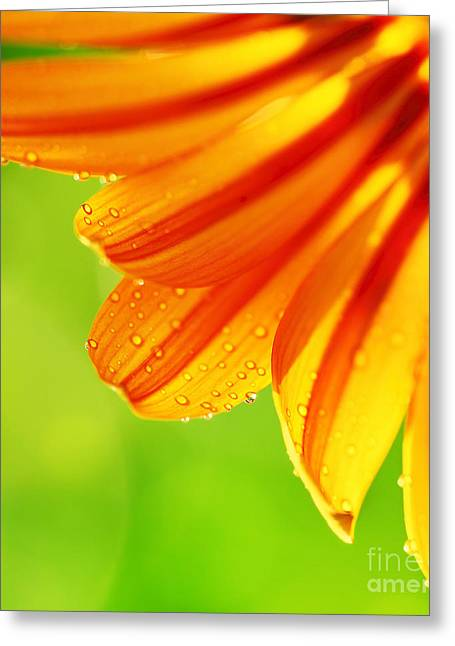 Close Focus Floral Greeting Cards - Abstract flower petals colorful floral border Greeting Card by Anna Omelchenko
