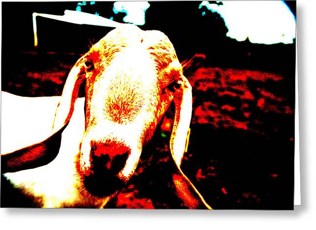 Abstract Goat Greeting Card by Lon Casler Bixby