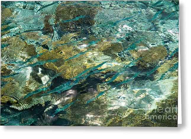 D300 Greeting Cards - Abstract of the Underwater World. Production by Nature Greeting Card by Jenny Rainbow