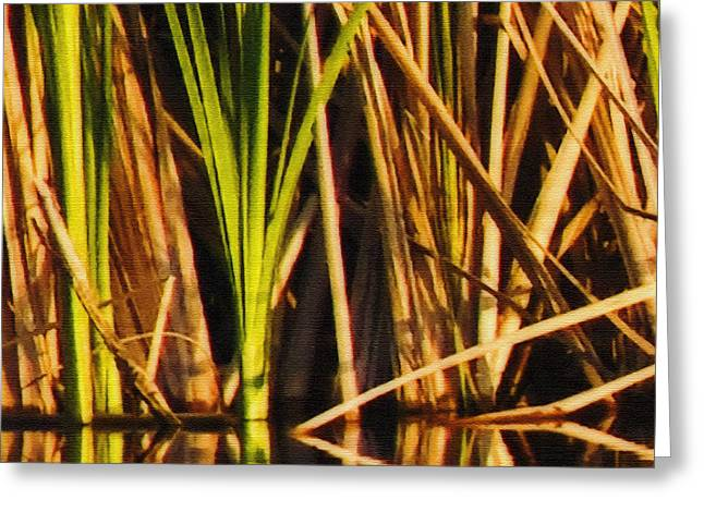 Abstract Reeds Triptych Top Greeting Card by Steven Sparks