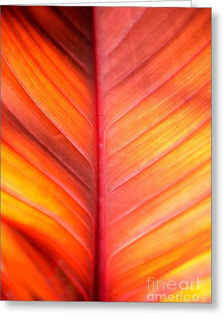 Business Greeting Cards - Abstract Greeting Card by Tony Cordoza