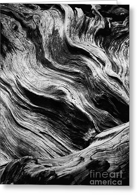 Huge Trees Greeting Cards - Abstract tree - black and white Greeting Card by Hideaki Sakurai