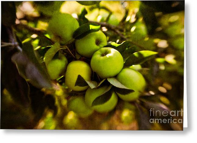 Flavorful Greeting Cards - Abundant Harvest Greeting Card by Venetta Archer