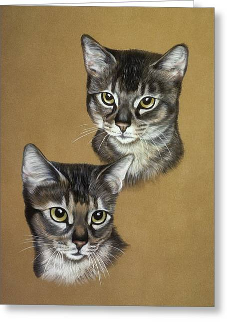 Abyssinian Cats Greeting Card by Patricia Ivy