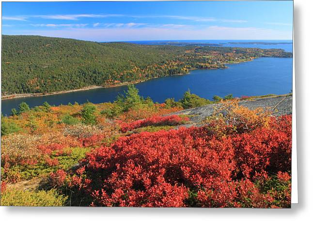 Somes Sound Greeting Cards - Acadia Mountain Foliage and Somes Sound Greeting Card by John Burk