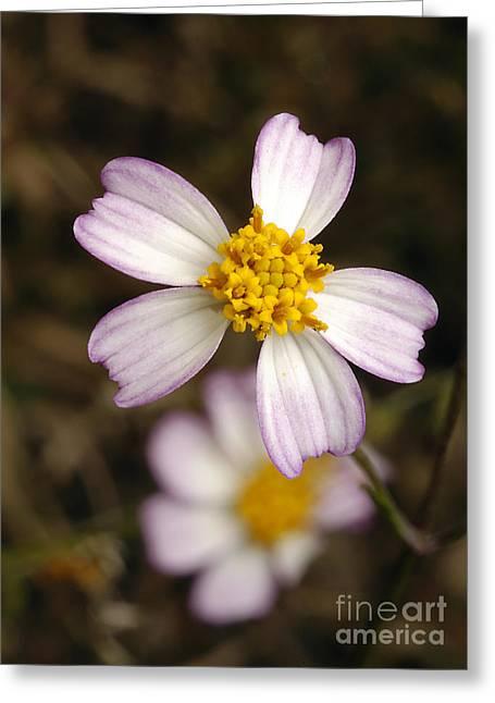 Biden Greeting Cards - Aceitillo Flower Greeting Card by Raul Gonzalez Perez