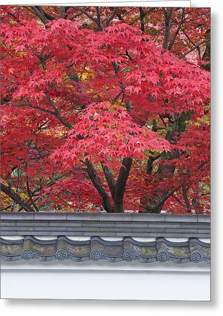 Acer Trees Acer Palmatum. Autumn Color Greeting Card by Rob Tilley