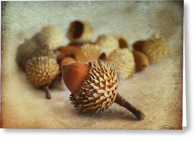 Floral Photographs Mixed Media Greeting Cards - Acorns Greeting Card by Batya Sagy
