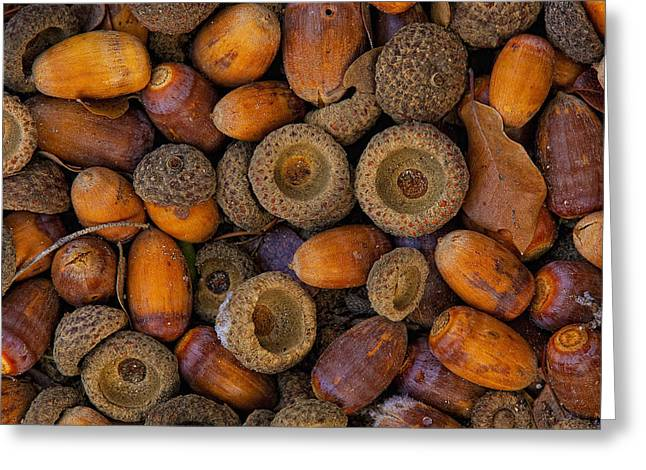 Acorn Greeting Cards - Acorns On Frozen Ground Greeting Card by Robert Postma