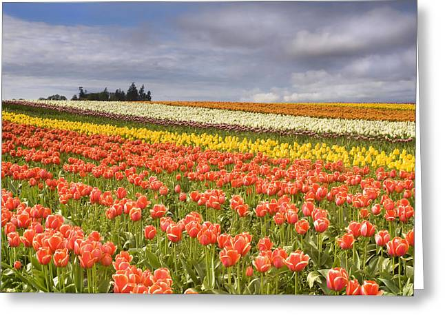 Storm Clouds Greeting Cards - Across colorful fields Greeting Card by Mike  Dawson