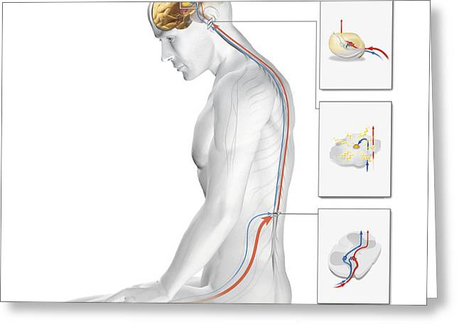 Qi Greeting Cards - Acupuncture Greeting Card by Claus Lunau