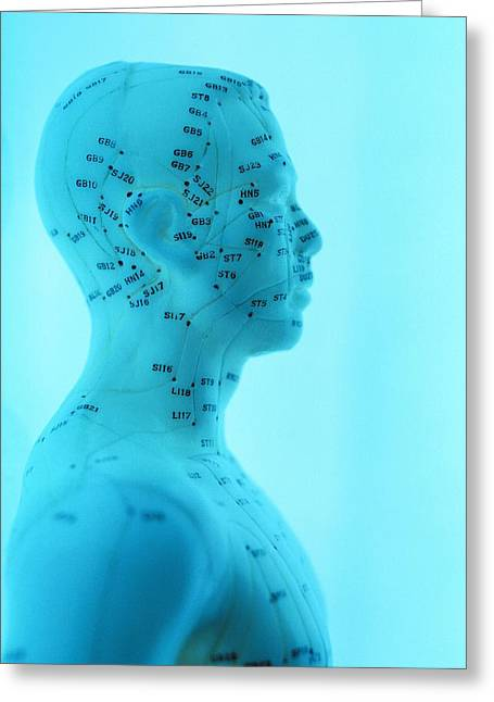 Qi Greeting Cards - Acupuncture Model Greeting Card by Lawrence Lawry