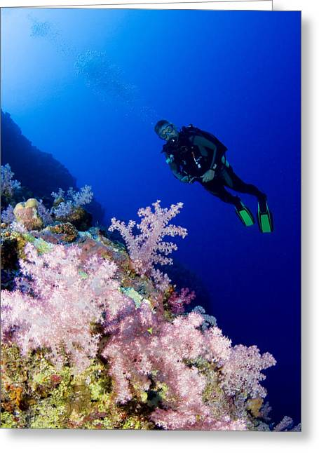 Snorkeling Photos Greeting Cards - Acyonarian coral and diver Greeting Card by Dave Fleetham - Printscapes