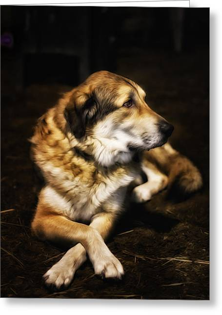 Lab Mix Greeting Cards - Adam - The Loving Dog Greeting Card by Bill Tiepelman