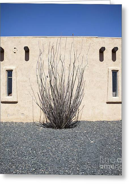 Adobe Greeting Cards - Adobe Building and Ocotillo Cactus Greeting Card by Paul Edmondson